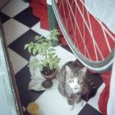 Cassius keeping an eye on the tomatoes.jpg